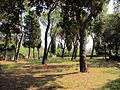 Bellosguardo, pineta 01.JPG