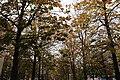 Berlin by Mohammad Hijjawi 307.jpg