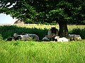 Best place to be on a hot day, Avebury - geograph.org.uk - 842013.jpg