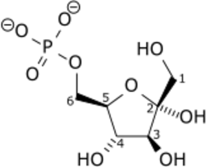 Phosphofructokinase 1 - Image: Beta D fructose 6 phosphate wpmp