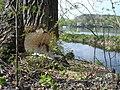Biber Paradies - panoramio.jpg