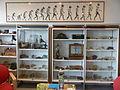 Bibliothèque de Paléontologie (CNRS) Université Lille I.JPG