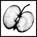 Bican Tomas hasselblad vitaminy 05.jpg