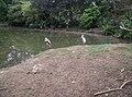 Birds in Zoo Negara Malaysia (16).jpg