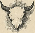 Bison skull detail, (Bookplate of Frederic Remington) (LOC) (15585483916) (cropped).jpg