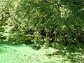 Bohinj - panoramio - sanja mm.jpg