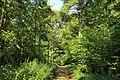 Bois d'Acren 03.jpg