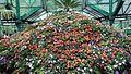 Botanical garden.1.jpg