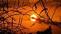 Branch-1753745 960 720.jpg