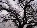 Branches on a rainy day.jpg
