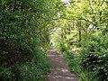 Bridleway, Frith Wood - geograph.org.uk - 659825.jpg