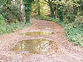 Bridleway, Shortheath Common - geograph.org.uk - 1576592.jpg