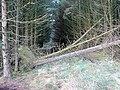 Bridleway at Bryn Bach - geograph.org.uk - 1113044.jpg