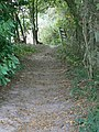 Bridleway at Souther Wood - geograph.org.uk - 1508045.jpg