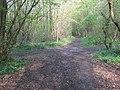 Bridleway junction in Stacklands Wood - geograph.org.uk - 1256353.jpg
