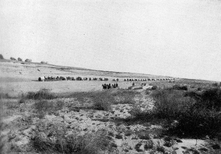 British ambulance wagons after the Battle of Rafa in 1917
