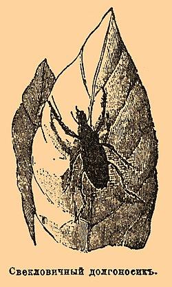 Brockhaus and Efron Encyclopedic Dictionary b57 096-2.jpg