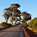 Bruce Rock-Merredin Road, 2014(3).JPG