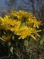 Brzke jaro - svaty kopecek - prirodni rezervace - 01.jpg