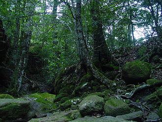 Budawang Range - Budwangs subtropical rain forest