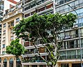 Buenos Aires- facades and trees (33999570796).jpg