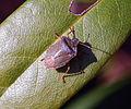 Bug (3365025443).jpg