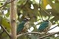 Burgers Zoo Mangrove Vogel.jpg