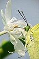 Butterfly (10555021845).jpg