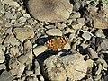 Butterfly 123.jpg