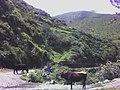 CAMINO DE TROCHA LA UNION - panoramio.jpg