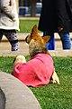 """Cachorro """"mendigo"""" - Beggar dog -Palacio de La Moneda - Santiago Chile (14947843961).jpg"""