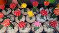 Cactus (shop in Jaffa) 2.jpg