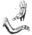 Cambridge Natural History Mammalia Fig 258.png