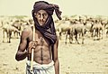 Camels are bred by Cholistani people which they sell for business, transportation, sacrifice and meat.jpg