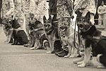 Canine teams hound victory at Top Dog competition 160516-F-RA202-057.jpg