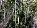 Canopy Walkway - Kakum NP - Ghana14 IMG 0805 (16009310430).jpg