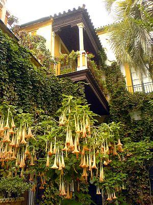 Casa de Pilatos - Indoor garden.