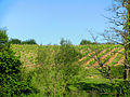 Castelnau-Rivière-Basse Vignes de l'AOC madiran.JPG