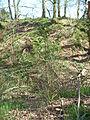 Castle Rings, Donhead St Mary 06.JPG