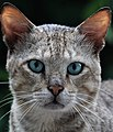Cat 17.jpg