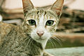 Cat public domain dedication image 0012.jpg