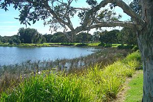 Centennial Park, New South Wales - Centennial Park