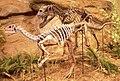 Ceratosaurus & Dryosaurus.jpg