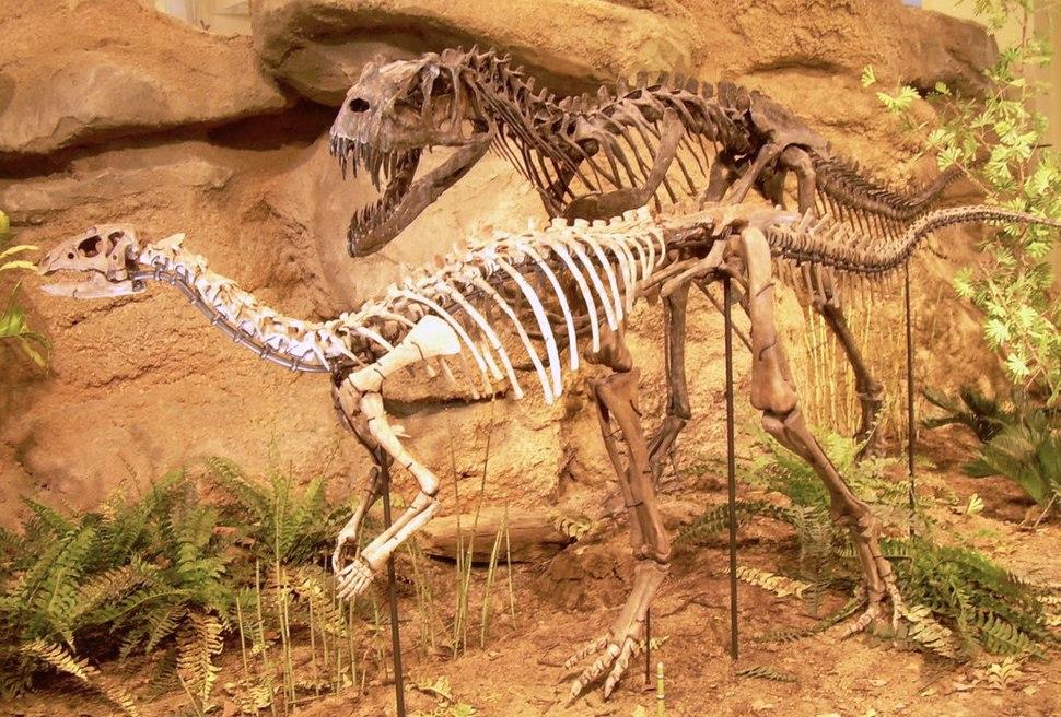 Ceratosaurus & Dryosaurus