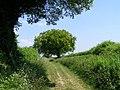 Cheriton Lane - geograph.org.uk - 188071.jpg