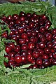 Cherries cerezas Valle del Jerte 01.JPG