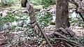 Chinnar River - panoramio (5).jpg