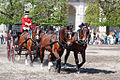 Christiansborg Ridebane - horses.jpg