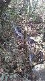 Chutes d'eau à Bamougong - 7.jpg