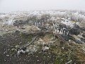 Cilfaesty Hill - geograph.org.uk - 310246.jpg